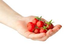 томаты удерживания руки вишни свежие стоковая фотография