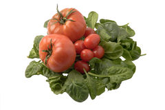 томаты шпината Стоковые Фото