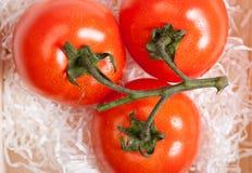 томаты Стоковые Фото