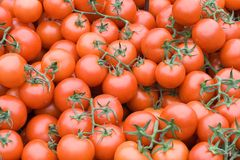 томаты Стоковое фото RF