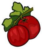 томаты иллюстрация штока