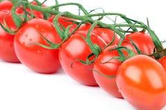 томат вишни ветви Стоковое Фото