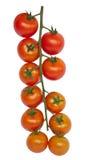 томат вишни Стоковые Изображения
