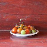Томат вишни Стоковые Изображения RF