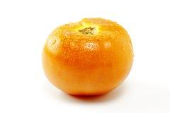 томат влажный Стоковое Изображение