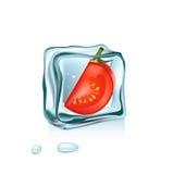 Томат в изолированном кубе льда Иллюстрация штока