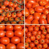 томат комплекта предпосылок зрелый Стоковая Фотография RF