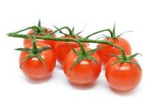 томат красного цвета вишни Стоковое Фото