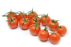 томат красного цвета вишни Стоковая Фотография