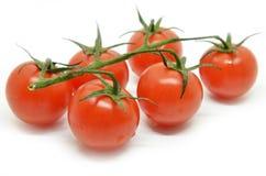 томат красного цвета вишни Стоковые Изображения RF