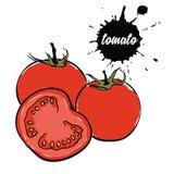Томат красного цвета овощей иллюстрация штока