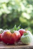 Томат красный и зеленый Стоковое Фото