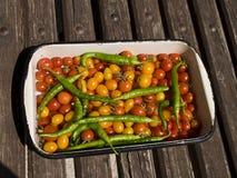томат перца Стоковое фото RF