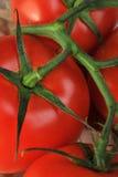 томат пука Стоковое Фото