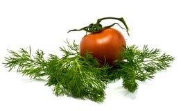 томат укропа свежий Стоковые Изображения RF