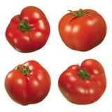 томат Стоковое Фото