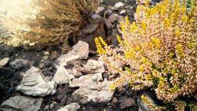 Тонизированное фото малое розовое и желтое растущего цветков на земле c стоковое фото