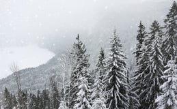 Тонизированное фото сценарного взгляда с сосновым лесом баварских Альп в зиме стоковые изображения rf