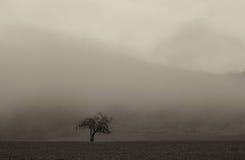 Тонизированный Sepia ландшафт дерева Стоковое Изображение RF