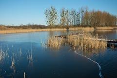 Тонкие лед и тростники на спокойном озере Деревья на береге и ясном не стоковое фото