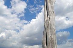 Тонкие стволы дерева против неба с облаками Стоковые Изображения