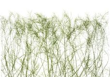 Тонкие стержни зеленой травы изолированные на белой предпосылке Стоковая Фотография RF