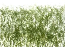 Тонкие стержни зеленой травы изолированные на белой предпосылке Стоковая Фотография