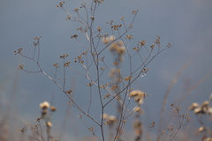Тонкие цветки осени в луге Предпосылка туманна Стоковые Фотографии RF