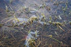 Тонкий прозрачный figurate слой льда на поверхности воды Стоковое Изображение