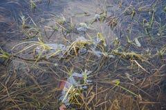 Тонкий прозрачный figurate слой льда на поверхности воды Стоковая Фотография RF