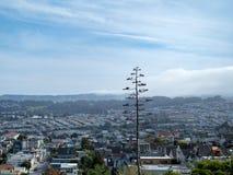 Тонкое дерево над смотреть районы Сан-Франциско стоковые изображения