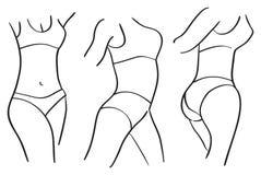Тонкое здоровое тело женщины с плоским вектором живота изолированное на Whi Стоковое Изображение RF