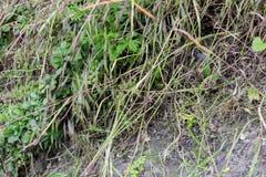 Тонко травы растя на камнях стоковое фото