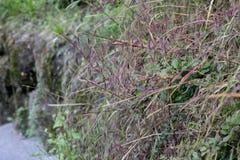 Тонко травы растя на камнях стоковые изображения rf