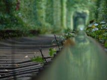 Тоннель влюбленности стоковая фотография