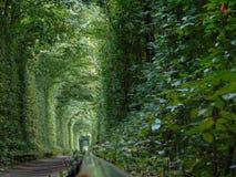 Тоннель влюбленности стоковая фотография rf