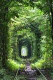 Тоннель влюбленности Стоковые Фотографии RF