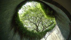 Тоннель дерева в лете на парке сток-видео
