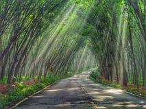 Тоннель дерева стоковое фото