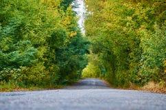Тоннель деревьев стоковые изображения rf