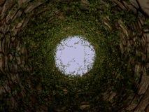 Тоннель или колодец плюща каменные Стоковые Фотографии RF