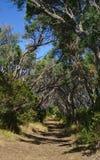 Тоннель как идя путь в лесе стоковые фото