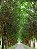 Тоннель Миртл Crepe стоковое фото rf