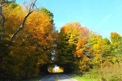Тоннели дороги через деревья падения Стоковые Фотографии RF