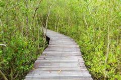 Тоннель дерева, деревянный мост в лесе мангровы Стоковая Фотография RF