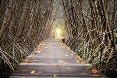 Тоннель дерева, деревянный мост в лесе мангровы Стоковое фото RF