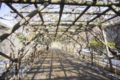 Тоннель дерева стоковая фотография rf