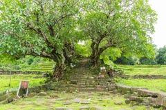 Тоннель дерева Стоковые Фотографии RF