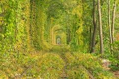 Тоннель деревьев прячет старый железнодорожный путь В расстоянии вы можете увидеть силуэт девушки в красном цвете Стоковое Фото