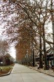Тоннель деревьев Стоковая Фотография RF